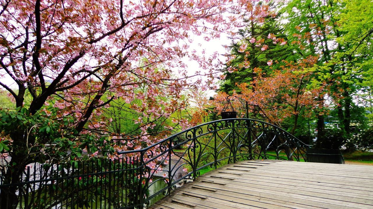Bridge Flowers Flower Bridge Bergen Norway Tree Nature Railing Travel Destinations Beauty In Nature No People Outdoors Growth Footbridge Tranquility Vacations Day Tree Area Elevated Walkway Wanderlust Aroundtheworld Places Travelling Travel