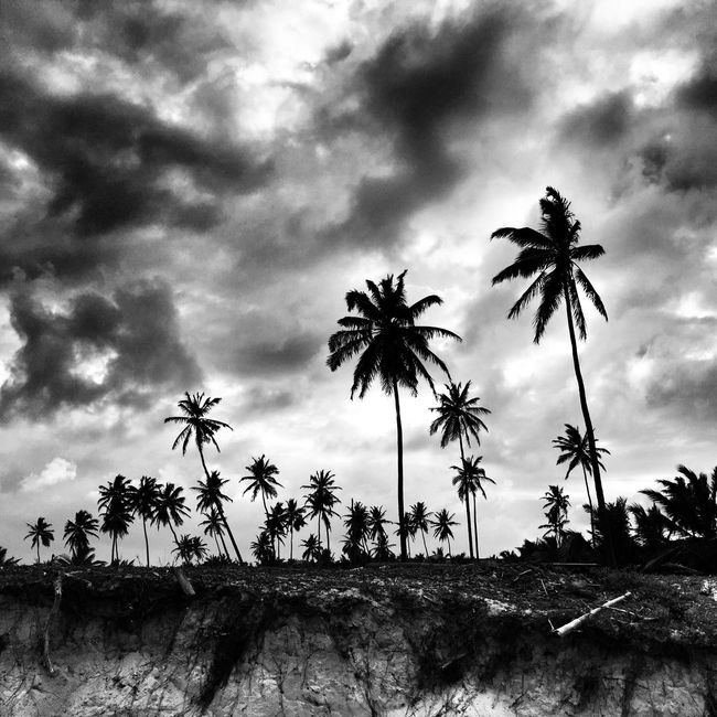 Black & White Palm Trees Check This Out Taking Photos Love My Job Travel Destinations Beach Life Photooftheday Travelphotography Travel And Leisure Clay Hayner Photo ClayHaynerPhoto Photoshoot Travel Photography Palmtree Art Traveling Dominican Republic Traveler Beach Beach Photography