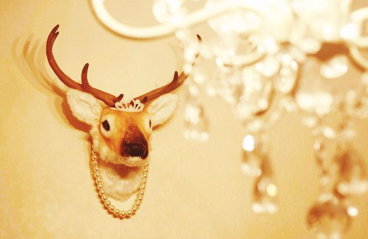 My Room Hunting Trophy Interior Nature Japan Interior Design Deer