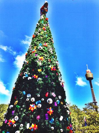 Christmas Christmas Tree Taking Photos Check This Out Outside Sky EyeEm Best Shots Sydney Australia Walking Around