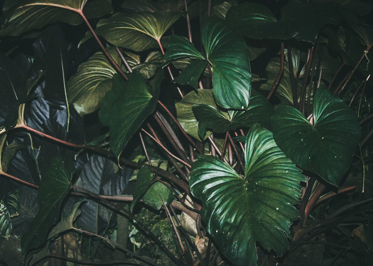 leaf, plant, green color, nature, growth, outdoors, no people, beauty in nature, day, freshness, close-up, fragility