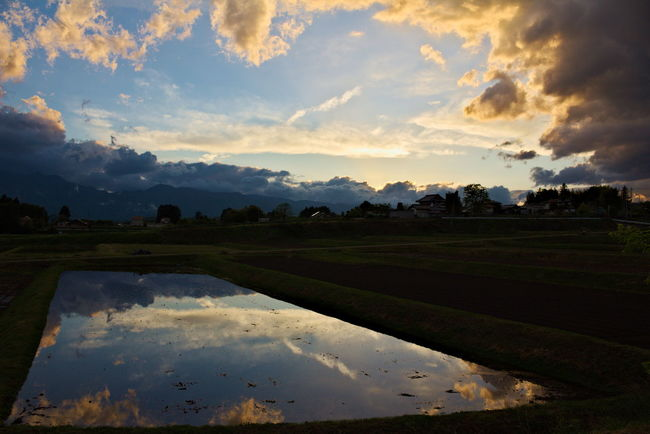 beautiful sunset. reflection on rice fields. Beauty In Nature Cloud Cloud - Sky Cloudy Growth Landscape Nature No People Non-urban Scene Outdoors Reflection Reflection Reflections Reflections In The Water Rural Scene Scenics Sky Sunset Tranquil Scene Tranquility Water Weather 反射 田んぼ 田舎