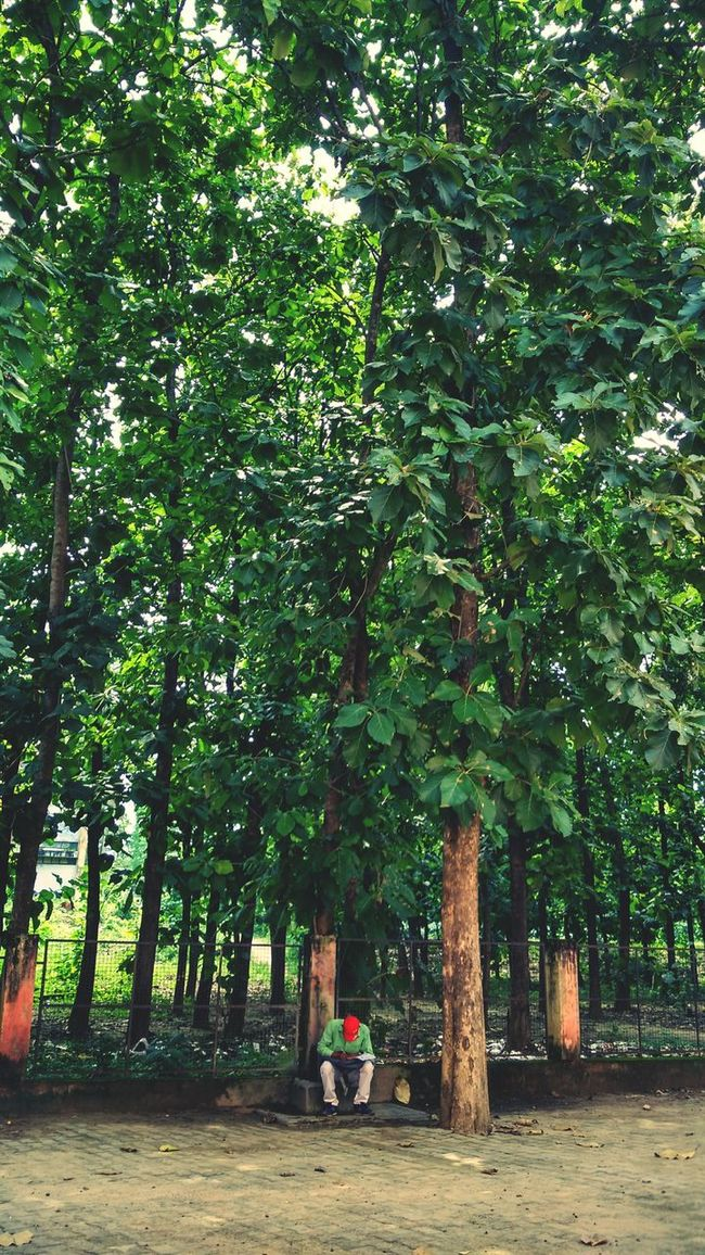 People And Places Non-urban Scene WoodLand Tree Person Green Color Growth Day Nature Eyeem Photo Eyeem India EyeEm Busy People Eyeem Market Eyeemphoto