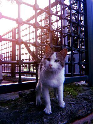 mi_yaww #Sunday #Nature  #animal #photooftheday #photography #Turkey #analogue #JustMe #KOTD Pets Domestic Cat One Animal Domestic Animals Animal Themes Indoors  No People Day