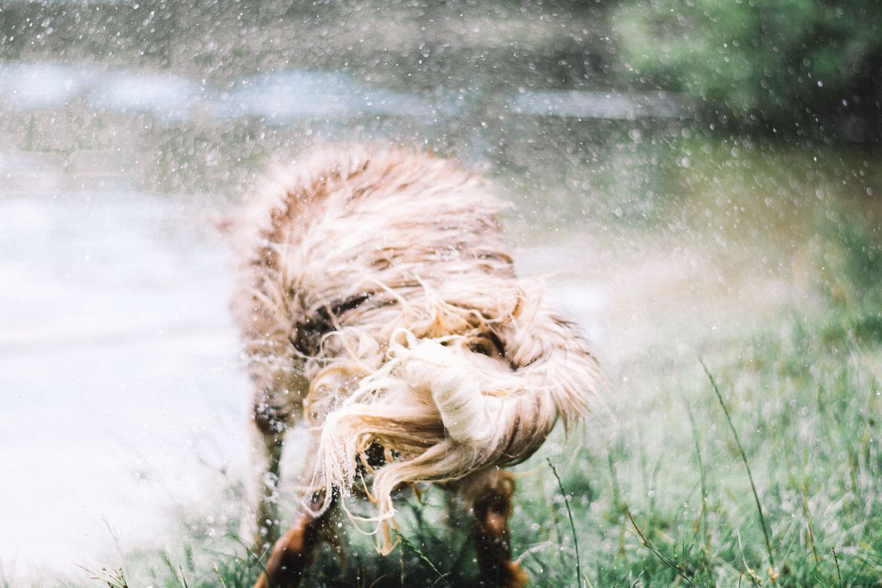 Dog shaking 🌪 Showcase August 2016 showcase august The Magic Mission Nature nature_collection Nature photography beauty in Nature The Week On Eyem The Week On EyeEem EyeEm Best Shots eye4photography Well Turned Out Taking Photos Check this out Hello world water lake vscocam Beautiful dog Dogs Love The Netherlands Things I Like EyeEm gallery