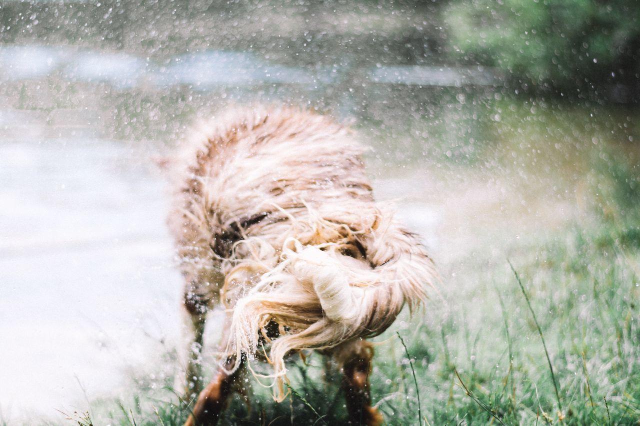 Beautiful stock photos of animals, water, outdoors, nature, day