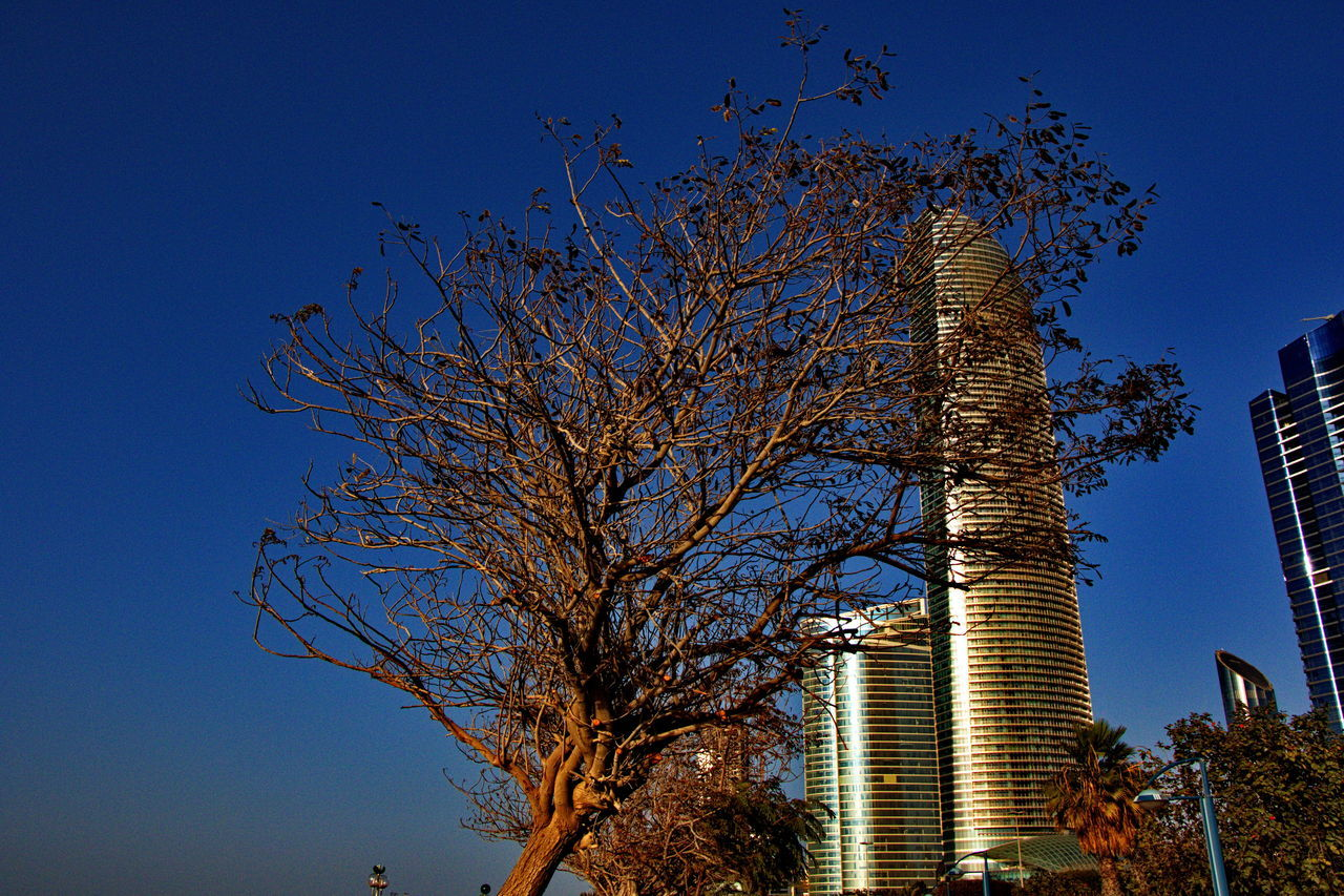 tree, bare tree, low angle view, blue, clear sky, skyscraper, outdoors, sky, no people, day, branch, growth, architecture, building exterior, nature, city