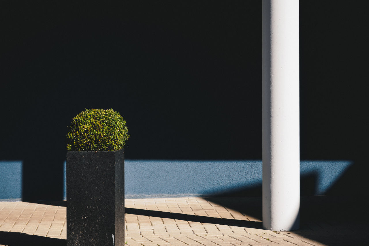 Buxus sempervirens Architecture Buxus Day Minimalism Nature No People Plant Shadow Sunlight Sunlight And Shadow