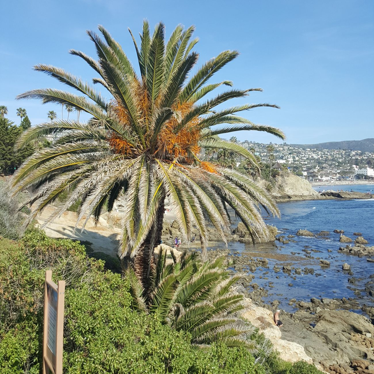 Heislerpark Laguna Beach Palm Trees Beach Beautiful Nature Beautiful Day