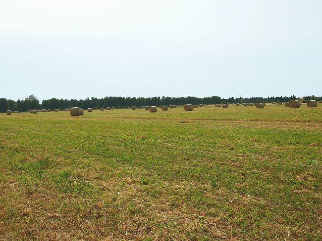 Field Wheat Rolls Just Us Enjoying Harvest Grass On Pants Sunny Day Photoshooting