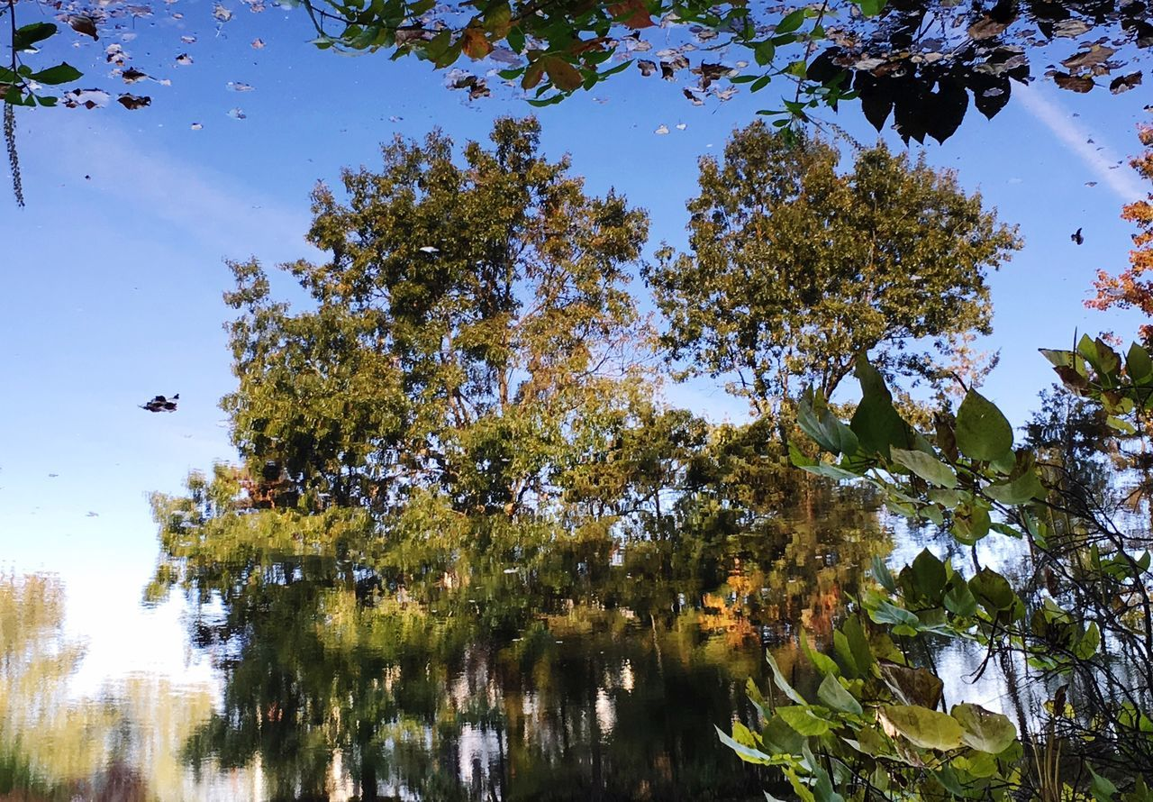 Reflections In The Water Reflecting Surfaces Reflecting Water Tree Nature Beauty In Nature Outdoors Treetop Reflections In A Lake Fall Leaves Autumn Tranquil Scene Flip Your Phones Upside Down EyeEm Best Shots Eyeemnature