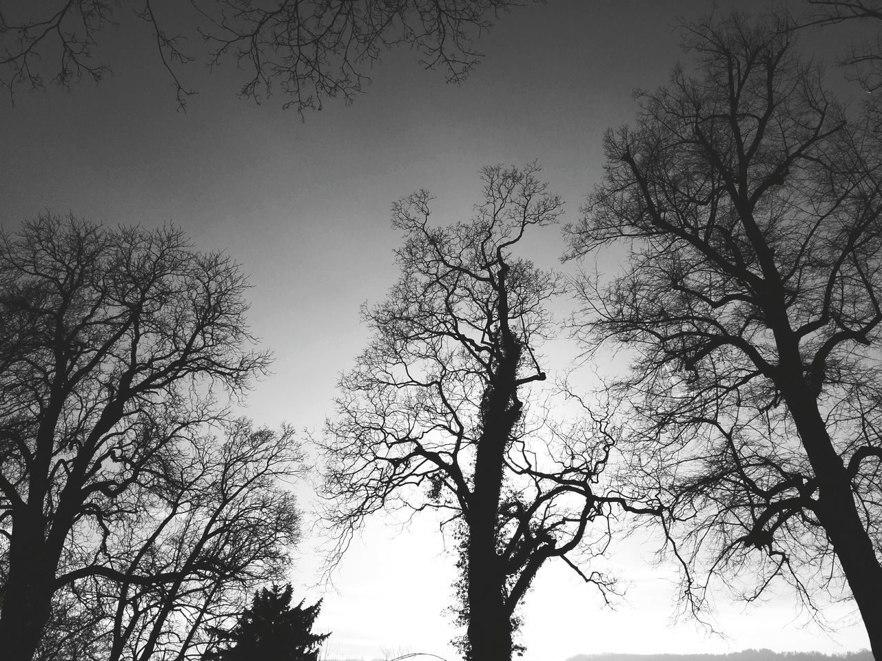 Bäume - Blackandwhite Nature Trees Landscape Zürich Switzerland Andrography