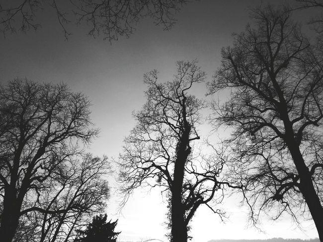 Bäume - Blackandwhite Nature Trees Landscape Zürich Switzerland Andrography