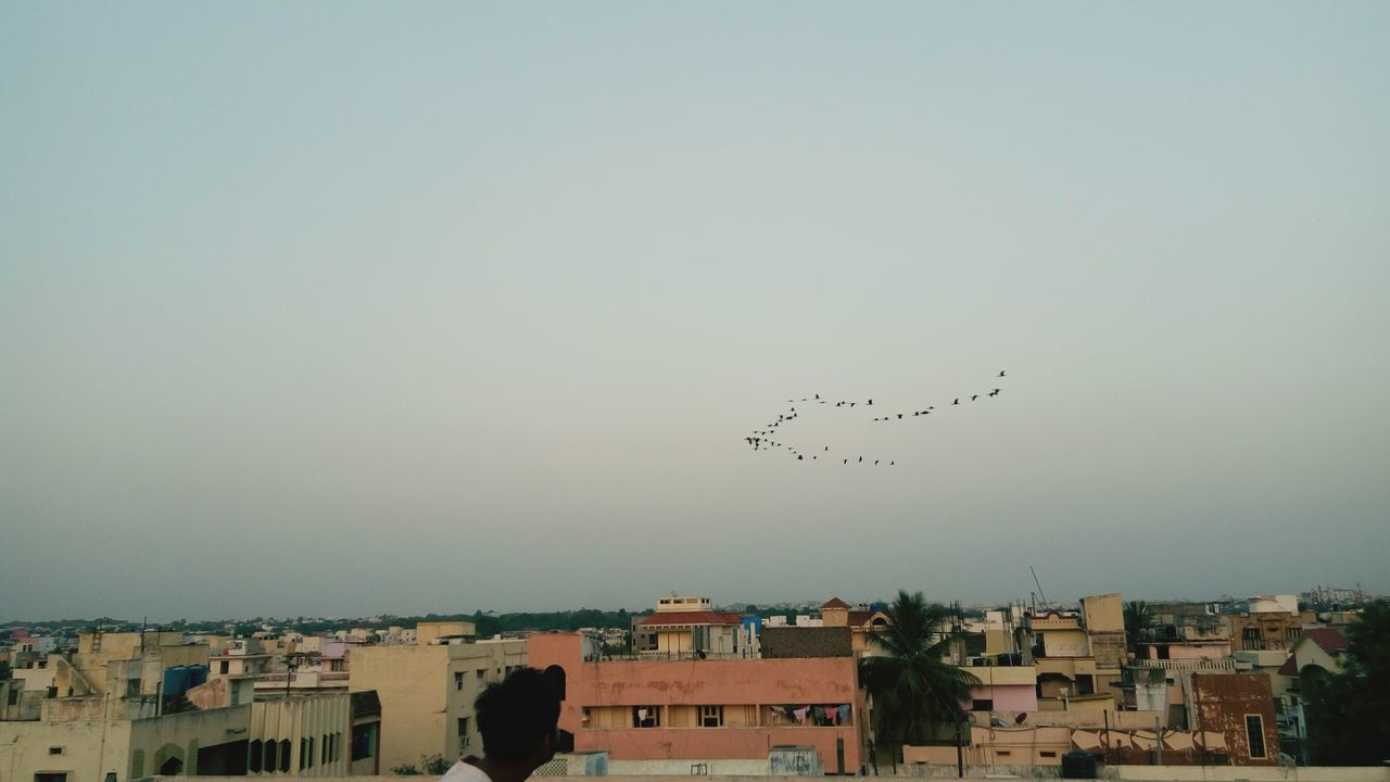Flying Bird Sky Large Group Of Animals Animal Themes Building Exterior Flock Of Birds Togetherness Day Clear Sky Summer Day Beauty In Nature