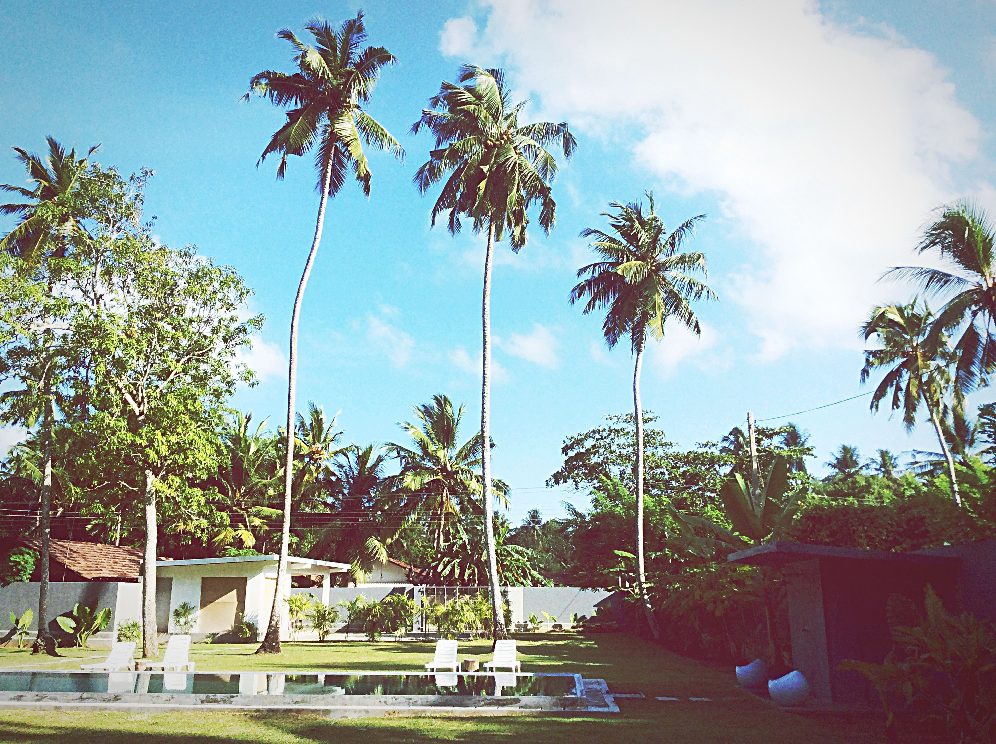 tree, sky, palm tree, cloud - sky, growth, cloud, cloudy, nature, built structure, tranquility, park - man made space, water, sunlight, building exterior, day, outdoors, architecture, no people, beauty in nature, scenics