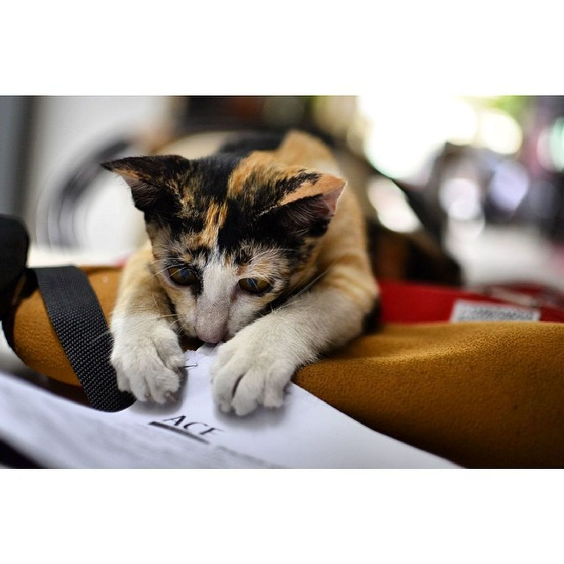 Can't reviewing for my exam because the cat is trying to eat my lesson sheet! XDD 😂😂 Nikon