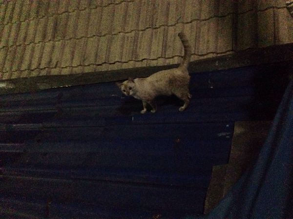 เหมียว One Animal Domestic Animals Pets Animal Themes Mammal Dog No People Indoors  Night