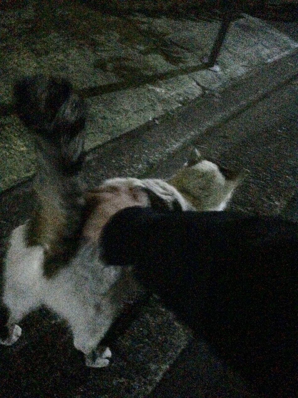 Cat 野良猫 Stray Cat シッポピン♪