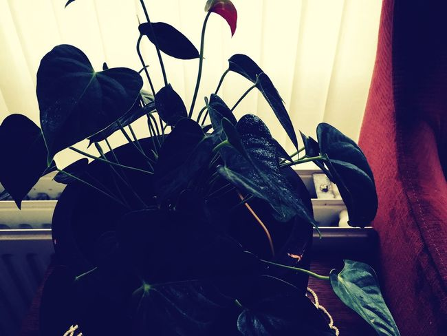 Leuk Green Color Green Plant Nature First Eyeem Photo Tree Nice