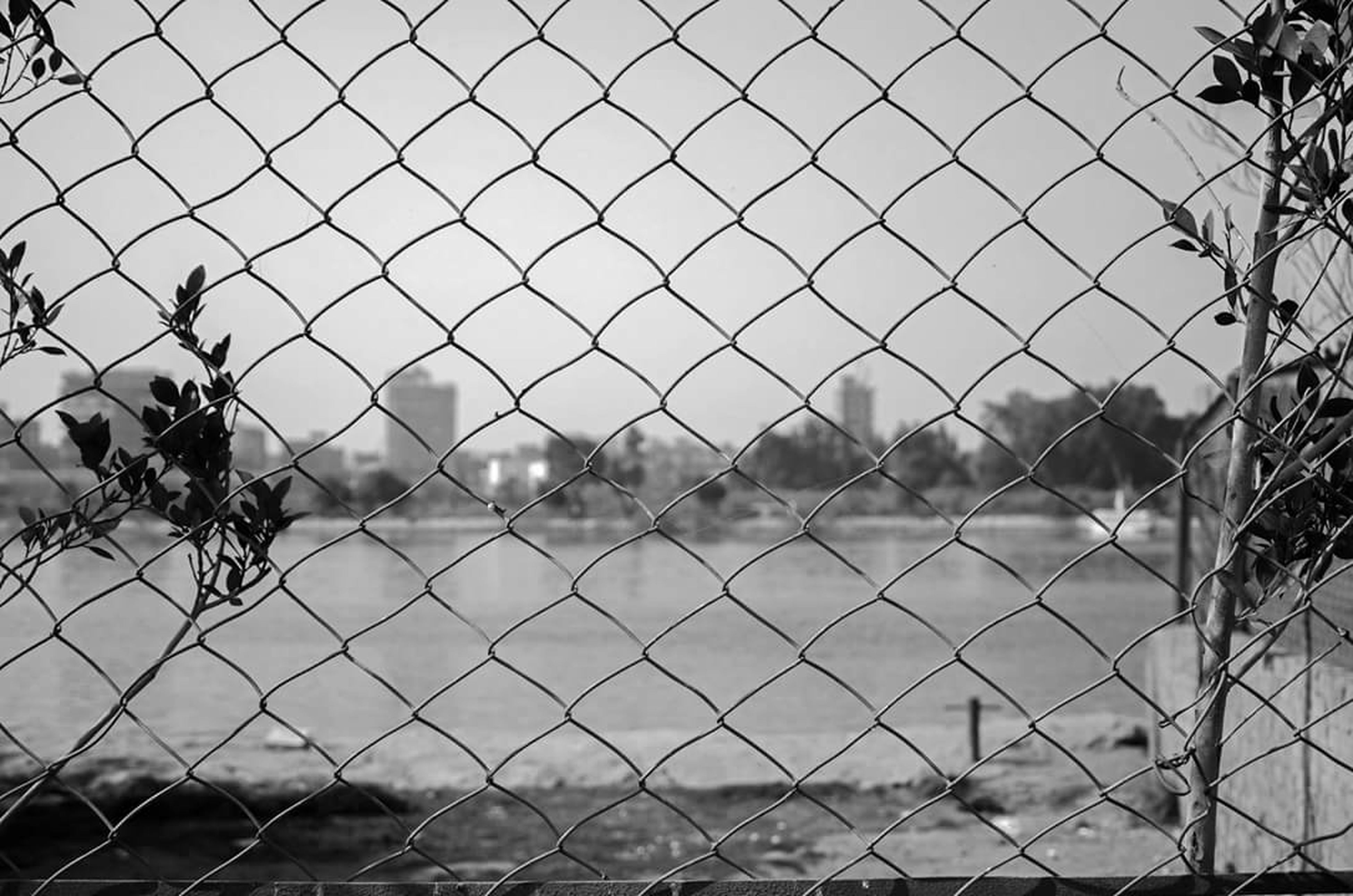 chainlink fence, fence, protection, safety, security, metal, focus on foreground, grass, field, sky, barbed wire, landscape, pattern, day, outdoors, close-up, no people, nature, full frame, tree