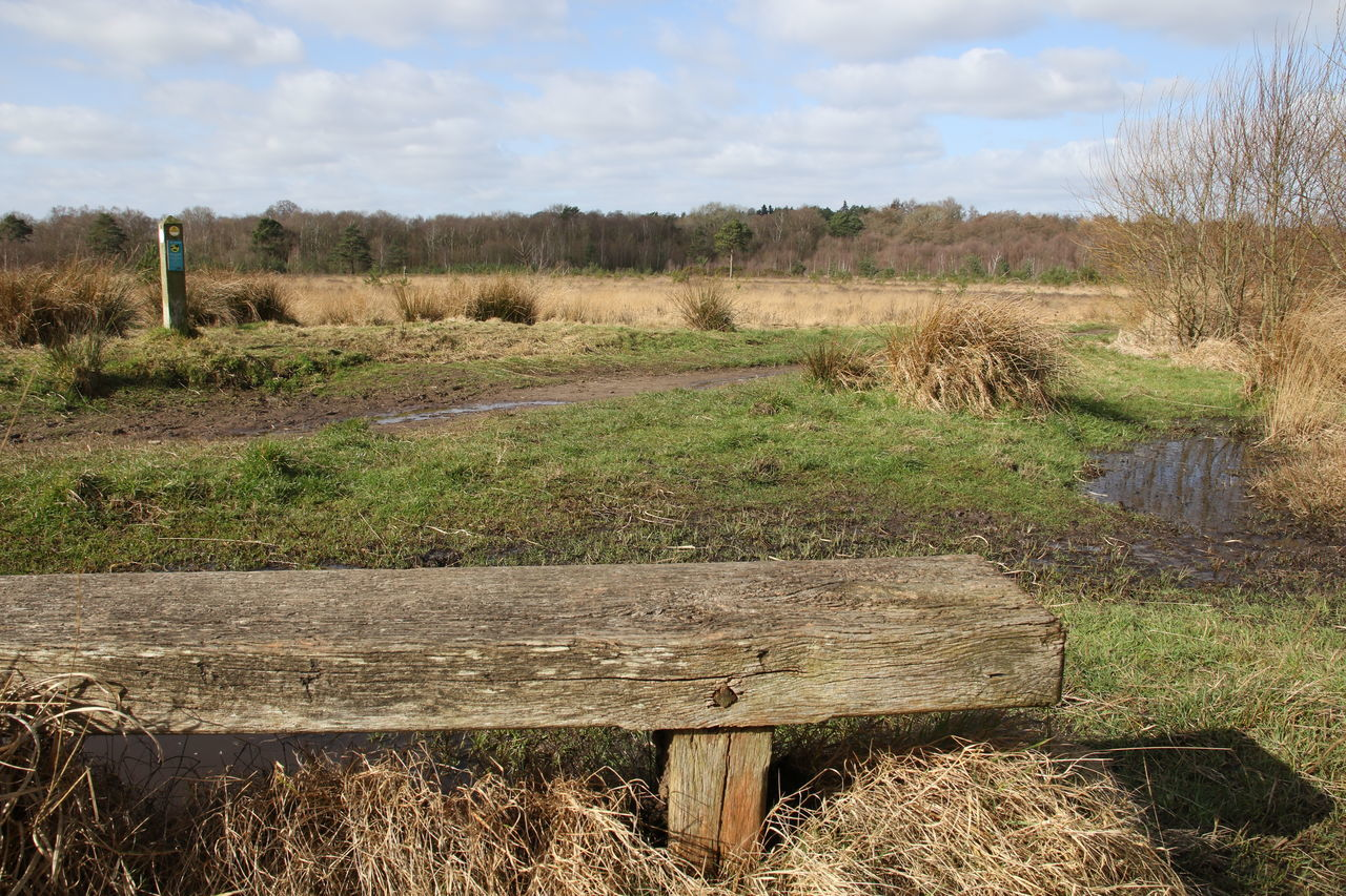 Beauty In Nature Bench Common Common Land Day Field Grass Growth Landscape Nature No People Outdoors Rural Scene Scenics Sky Sunny Surrey Countryside Tranquil Scene Tranquility Tree Walking Whitmoor Wooden Bench