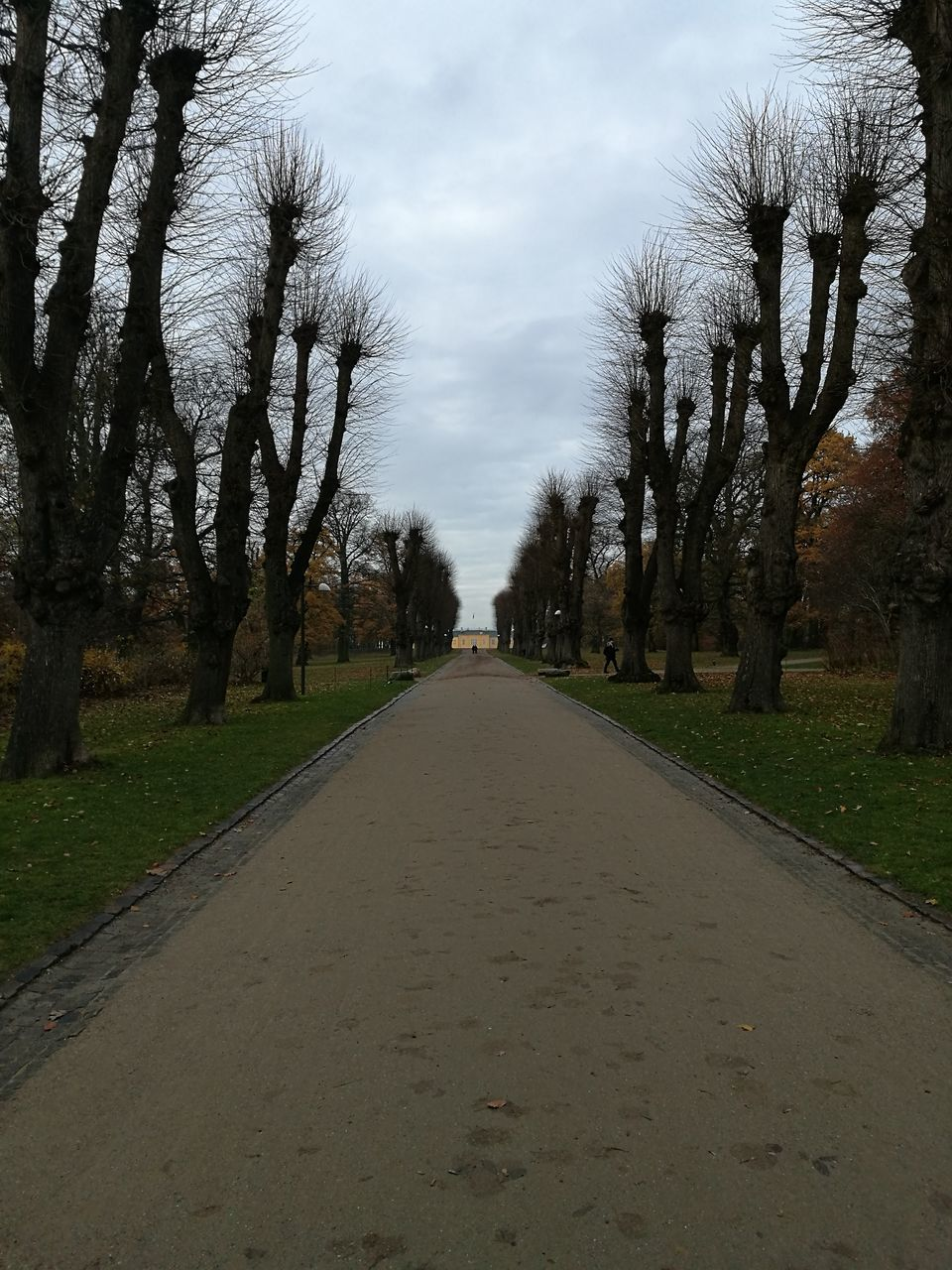 diminishing perspective, tree, the way forward, road, outdoors, sky, no people, nature, day, landscape, bare tree, scenics, beauty in nature
