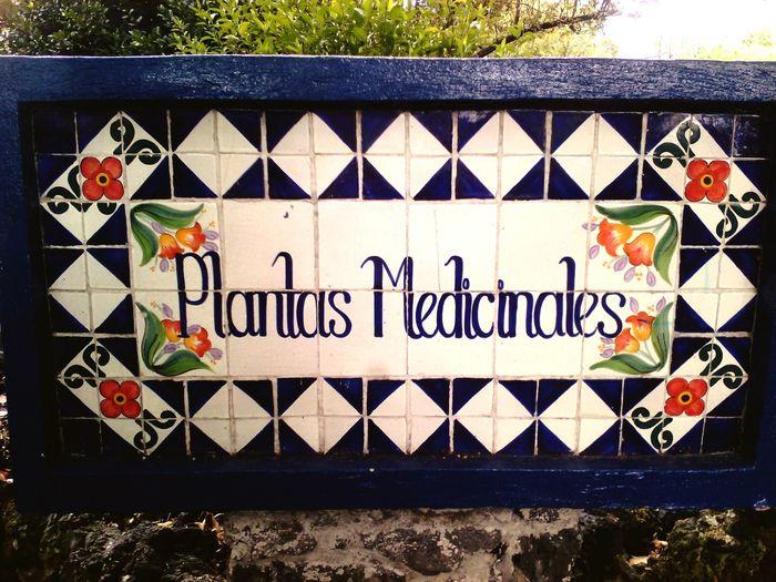 Plants 🌱 Naturelovers Medicine Plants Native Plants Botanical Garden