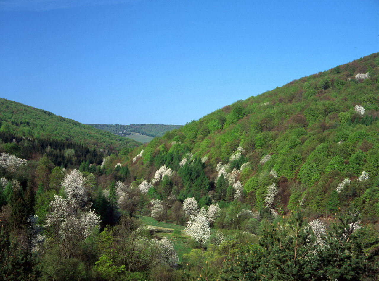 Beskid Beskid Niski Bloom Blooming Mountain Poland Polen Spring