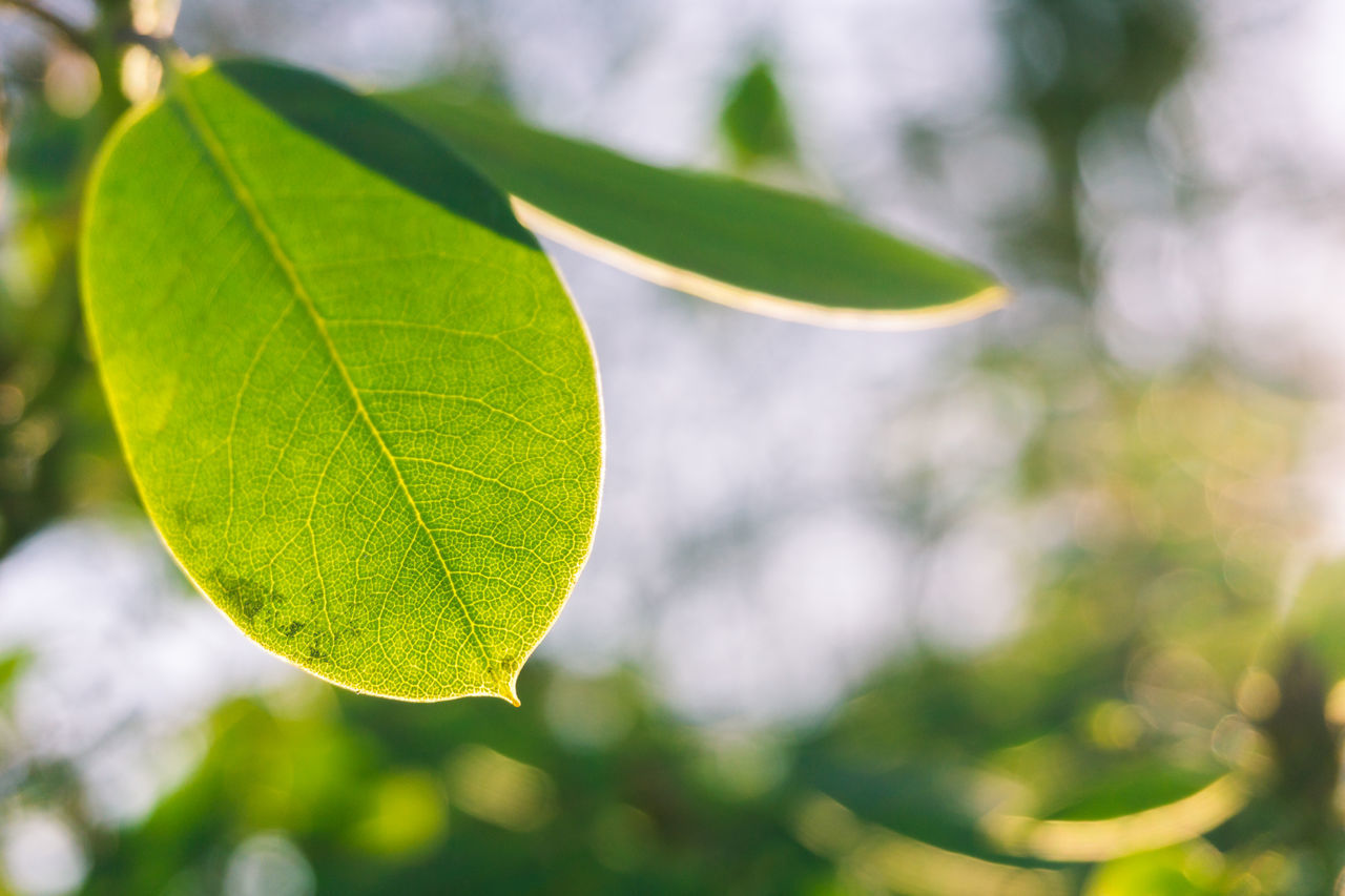 Backgrounds Closeup Focus On Foreground Green Green Leaf Green Leaves Leaf 🍂 Morning Morning Light Nature Nature_collection Spring Spring Has Arrived Sun Sunlight Sunlight ☀ Sunny Sunny Day Weather