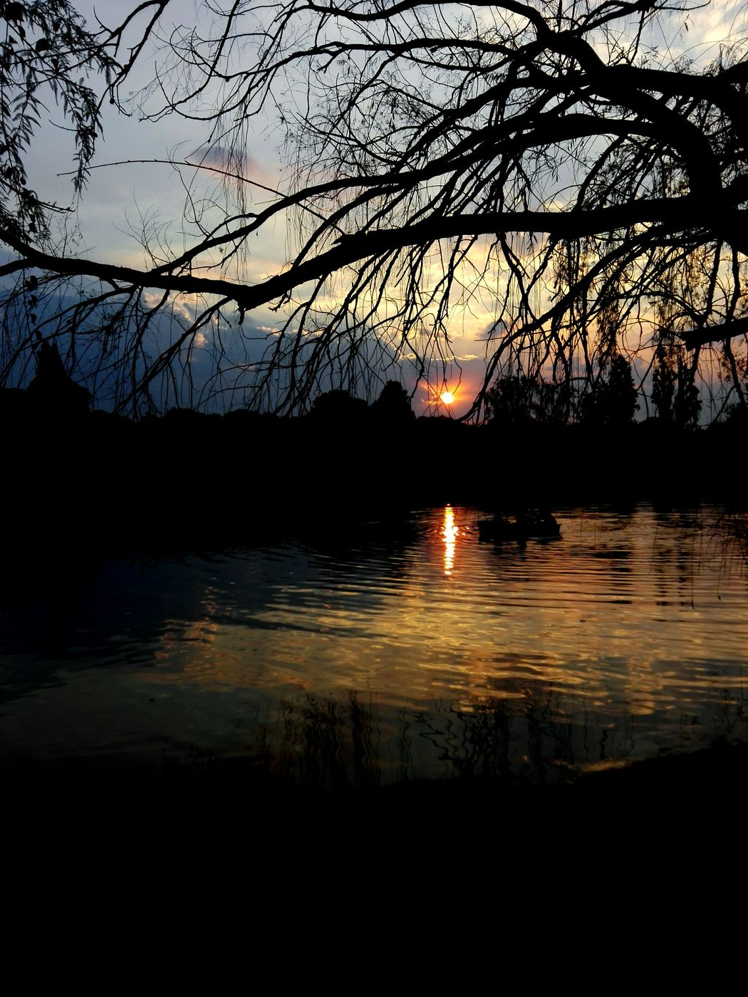 Check This Out another great Sunset Sunset_collection Sunset Silhouettes in Johannesburg Jozi Joburg at Zoo Lake Showcase April Skyporn Nature_collection The Great Outdoors - 2017 EyeEm Awards