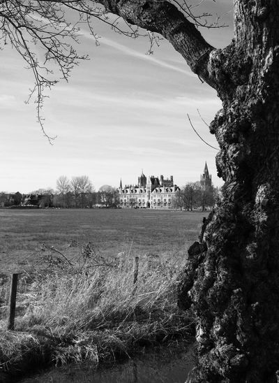 Tree Nature Sky Tranquility Growth Tranquil Scene Day Outdoors No People Beauty In Nature Scenics Building Exterior Architecture Landscape Oxford University Christchurch Meadow, Oxford Canonphotography Blackandwhite Photography