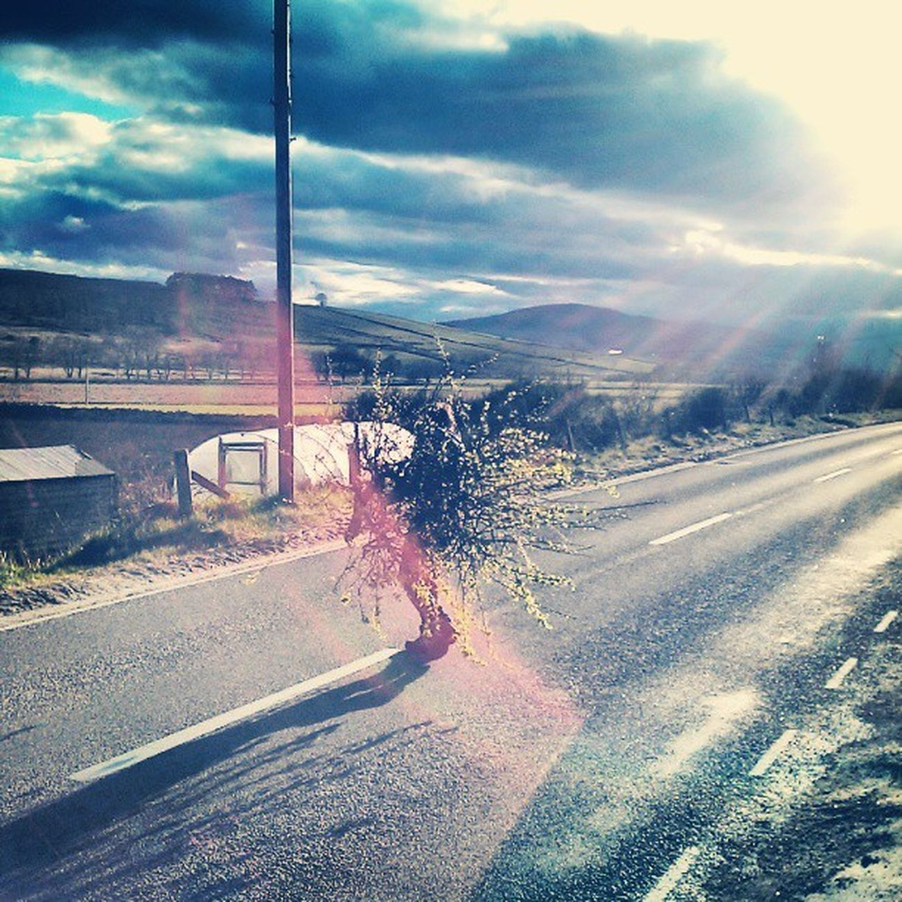 Adz disguised as a bush :) Mycamerastories Bush Disguise Ssshhh crossingtheroad lol branches sunlight lensflare myhusband road igscotland instascotland