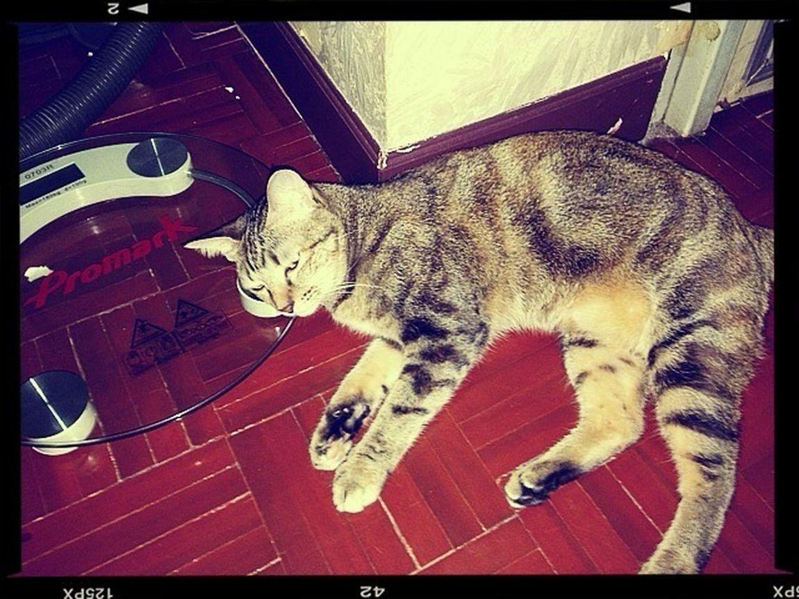 My Cat Ready To Sleep Ha Ha