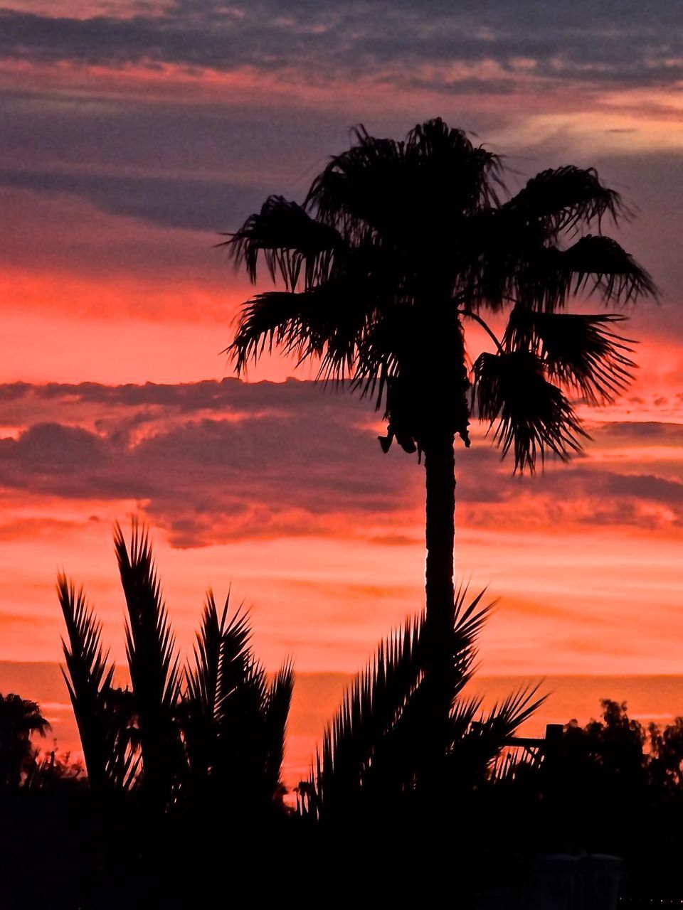 sunset, palm tree, tree, silhouette, beauty in nature, scenics, sky, nature, tranquility, tranquil scene, orange color, tree trunk, idyllic, growth, cloud - sky, outdoors, dramatic sky, low angle view, no people, travel destinations