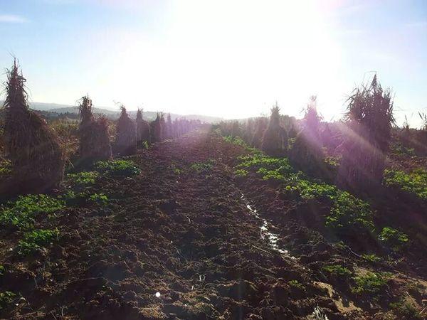 SunriseOrange Agriculture Nabeul