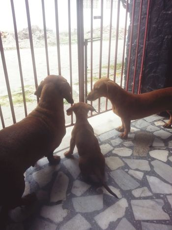 😢🐶💕🐶💕🐶💕 Duchshund Dogs EyeEm Animal Lover Lovepets  Lovedogs