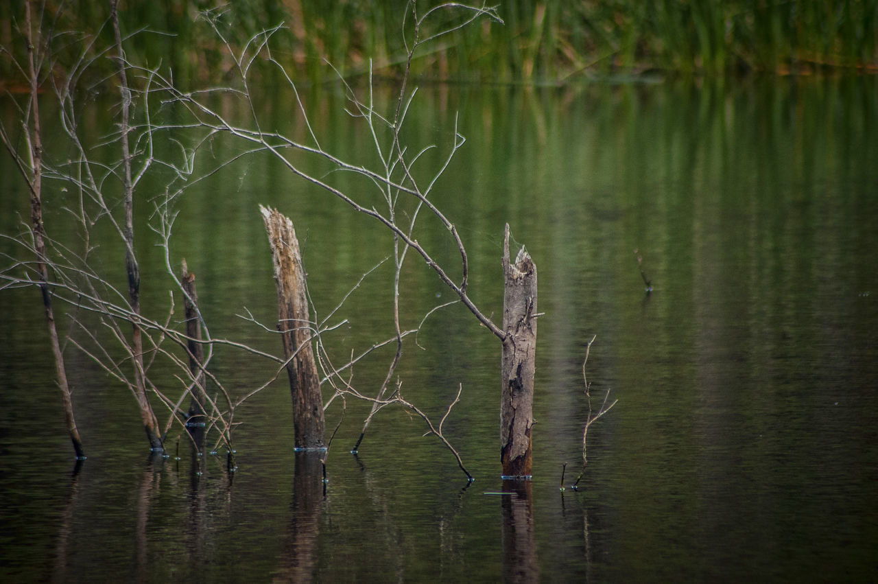 river decay Branches Dam Day Lake Nature No People Outdoors Pond Reeds Reeds, Weeds, Marshland, Marsh, Reflections In The Water River Tranquility Water
