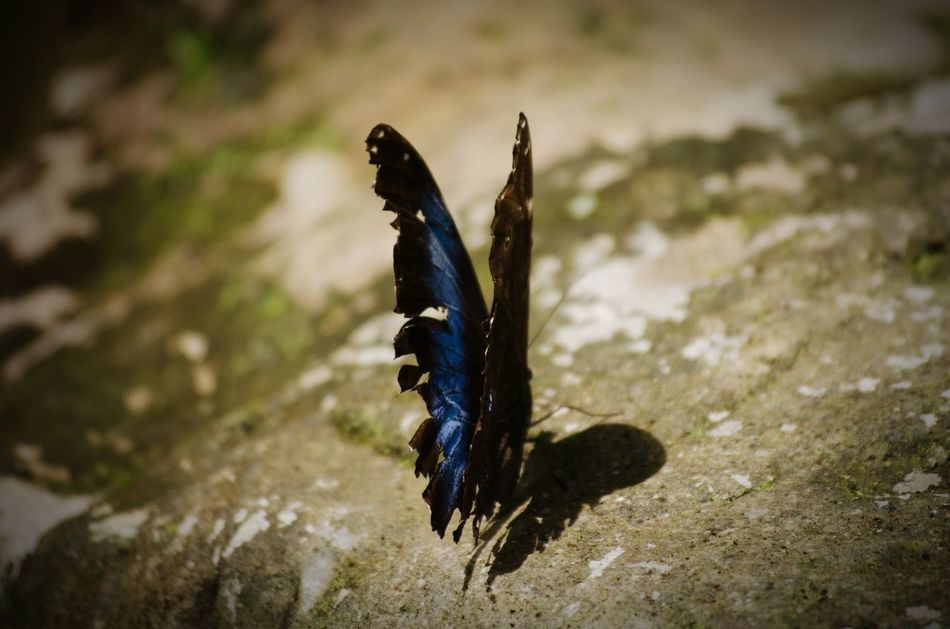 Beautiful stock photos of wings, Animal Themes, Animal Wing, Animals In The Wild, Butterfly
