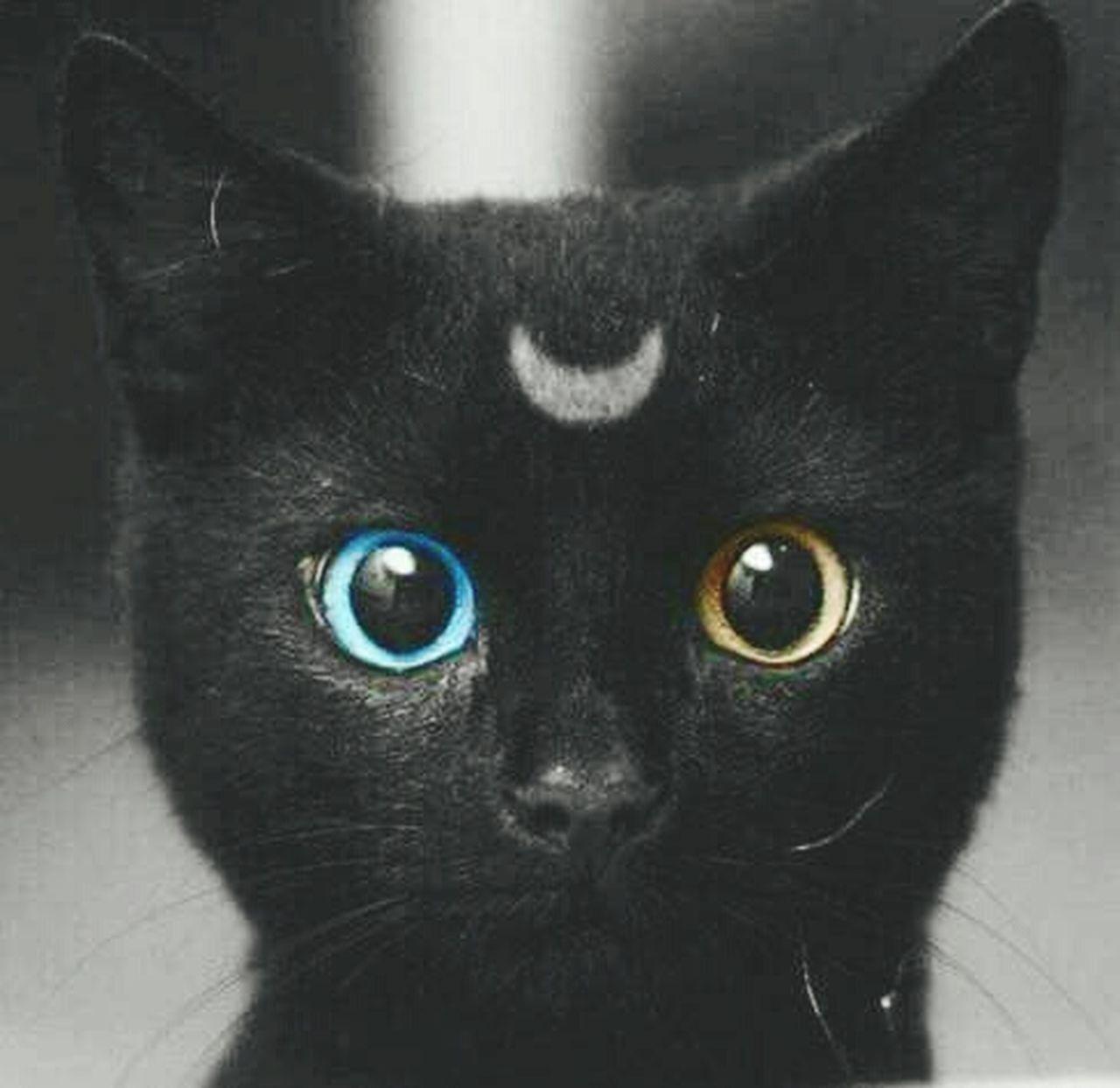 looking at camera, portrait, eye, domestic cat, pets, one animal, animal head, animal themes, domestic animals, black color, close-up, yellow eyes, human eye, mammal, iris - eye, indoors, eyeball, day, people