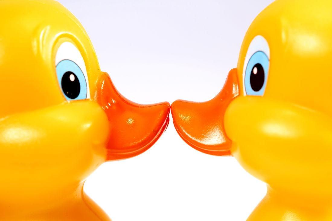 Clors Duck EyeEm Best Shots EyeEm Gallery Happy Indoors  Love Patitos Person Pico Studio Shot White Background Yellow