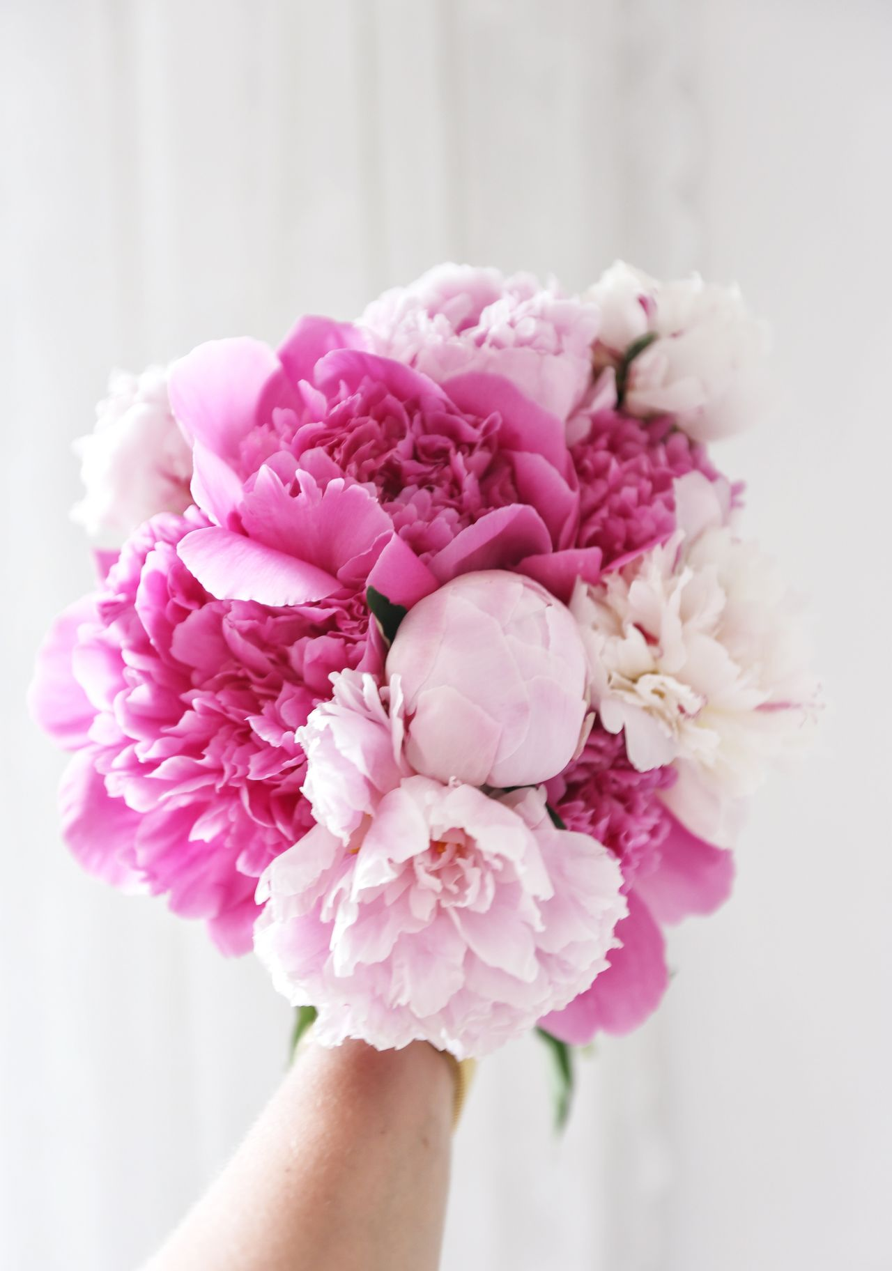 Flower Pink Color Human Hand Human Body Part Fragility Close-up Nature Peony  Holding One Person Bouquet Beauty In Nature People Adult Flower Head Indoors  Day White Background Freshness Adults Only Eye4photography