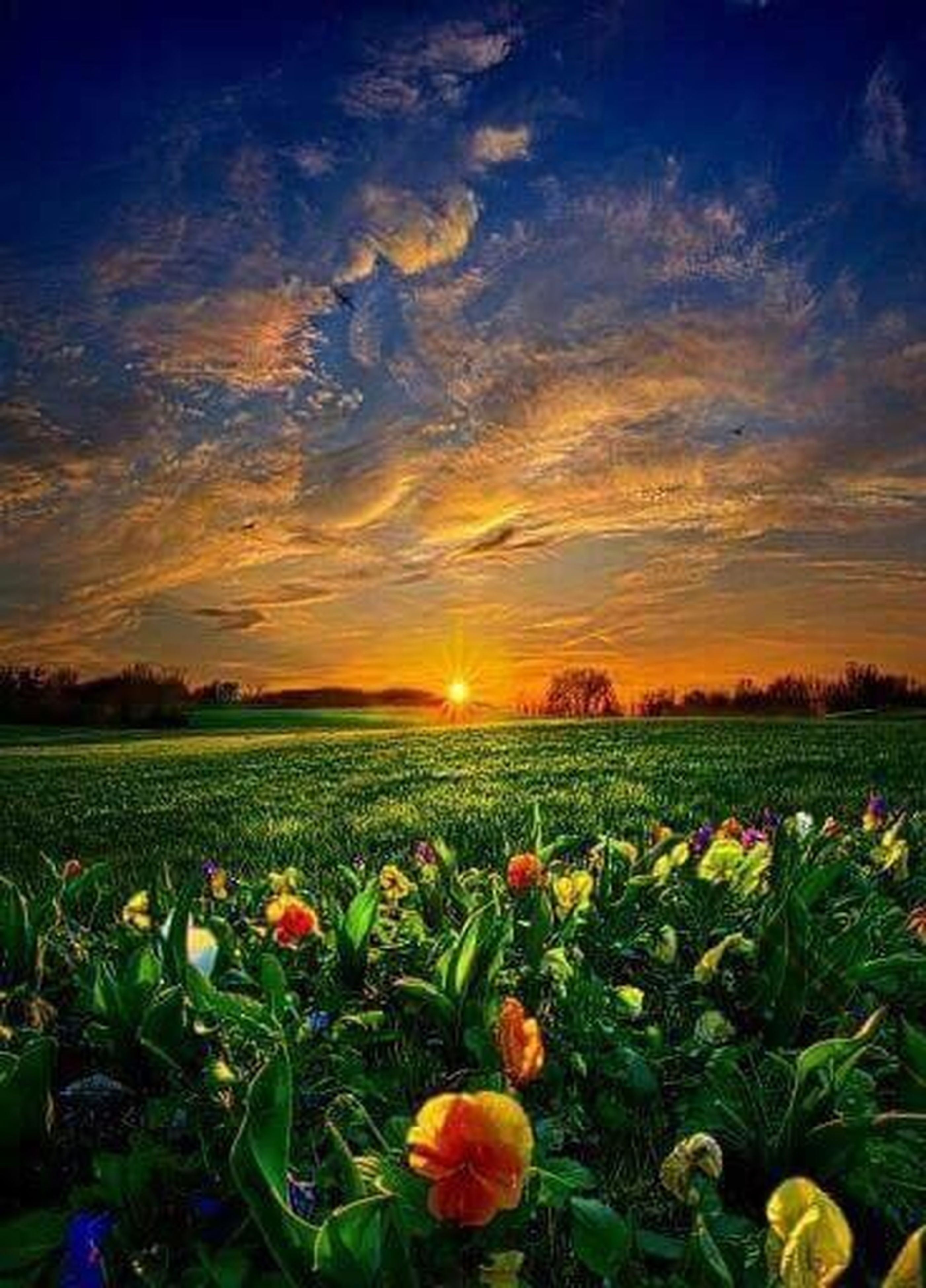 sunset, beauty in nature, tranquil scene, scenics, sky, field, tranquility, nature, landscape, sun, growth, flower, cloud - sky, plant, orange color, idyllic, rural scene, grass, sunlight, agriculture