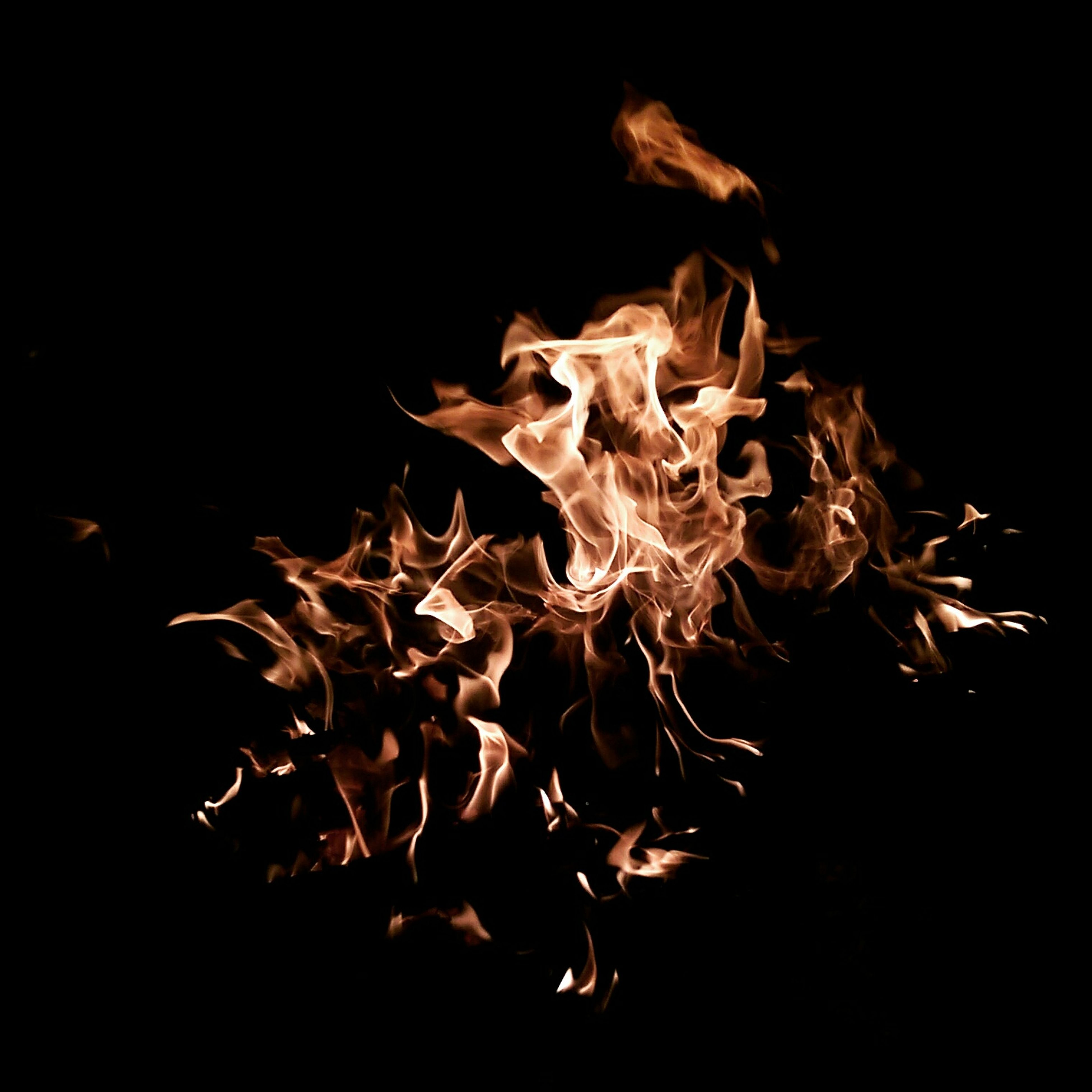 black background, night, studio shot, dark, copy space, close-up, nature, no people, dry, glowing, outdoors, heat - temperature, burning, light - natural phenomenon, yellow, fire - natural phenomenon, flame, beauty in nature, danger, plant