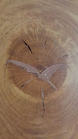 What looks like a bird in the knot of the wood used for a door Bird Wood Door Knot