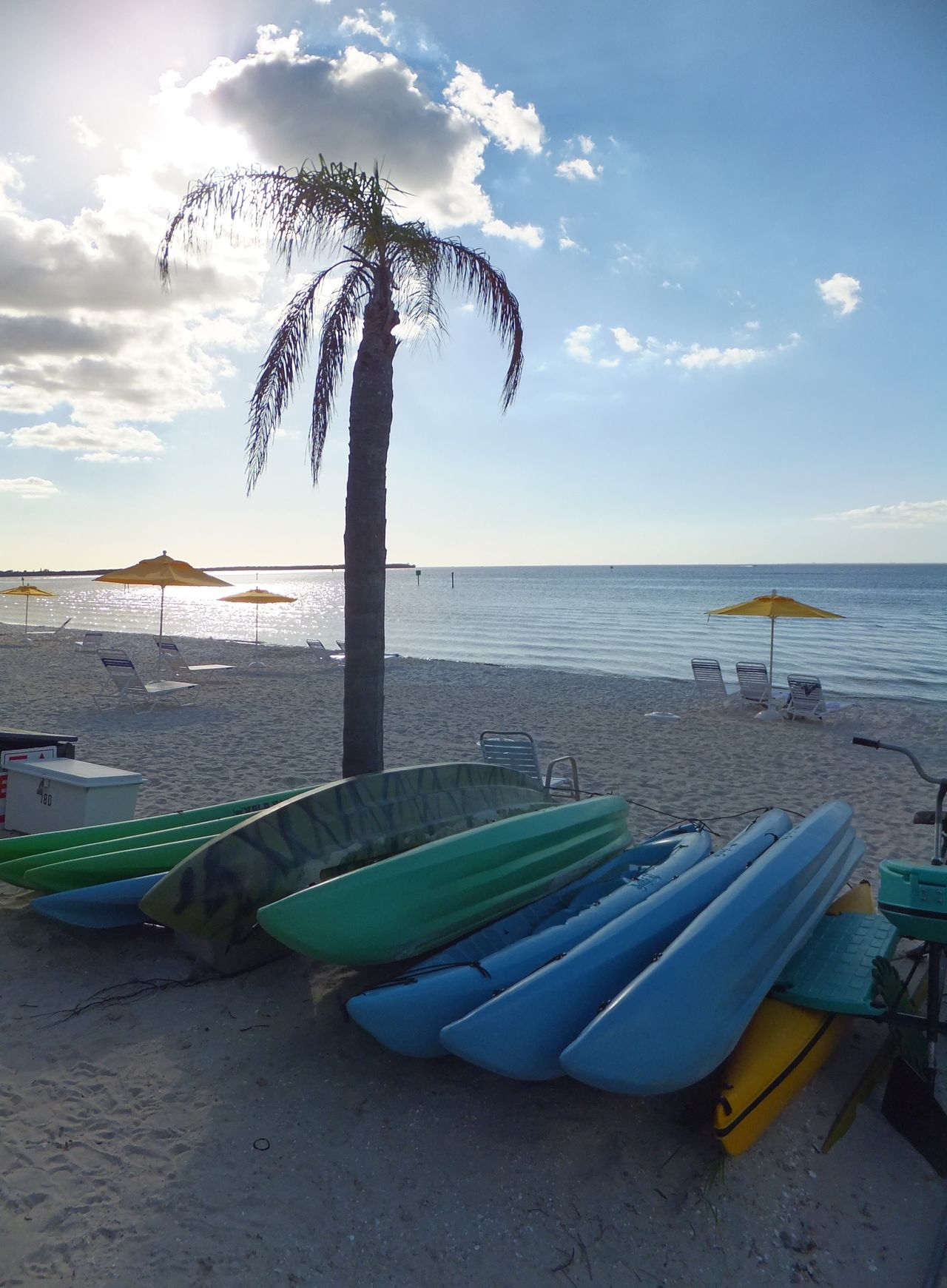 Beach Canoes Ocean Palm Tree Sand Sea Little Harbour