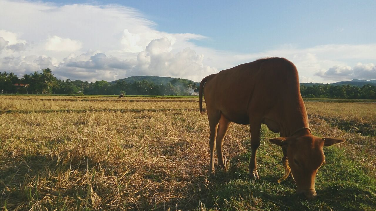 Beautiful stock photos of philippines,  Agriculture,  Animal Themes,  Beauty In Nature,  Day