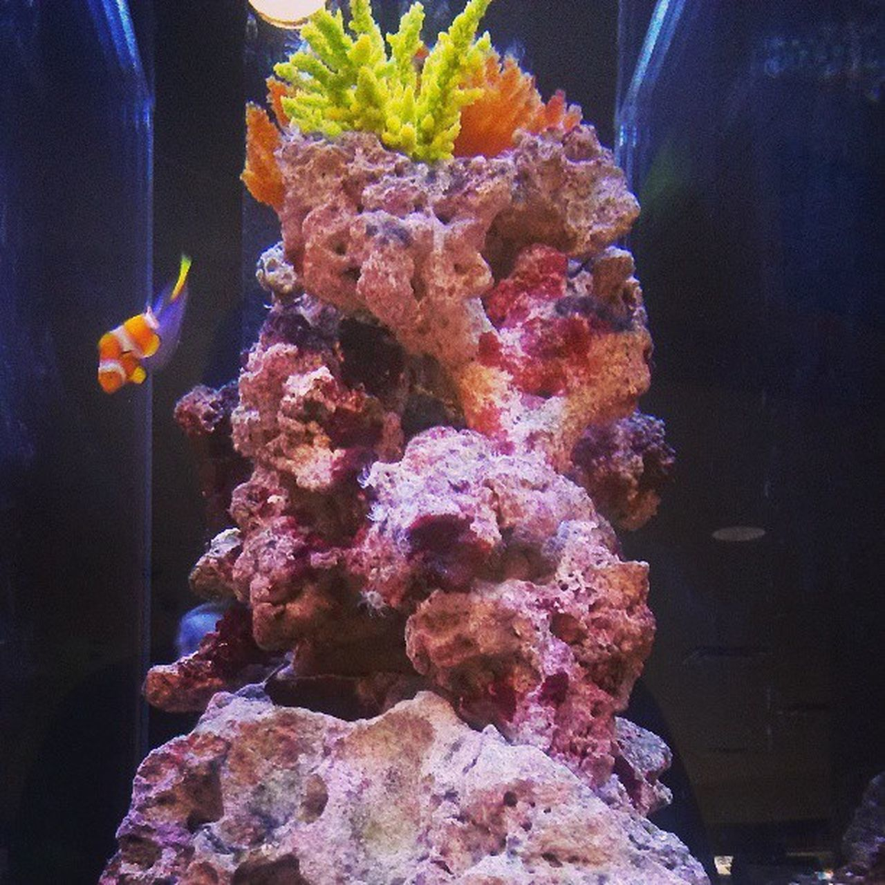 Aquarium Findingnemo Clownfish Dorie Nemo Fish Fishtank Water Rocks follow4follow