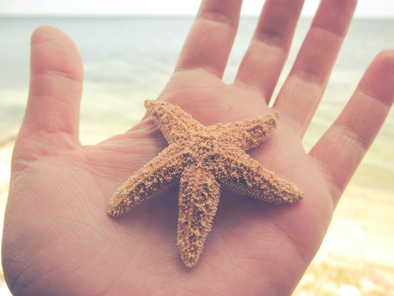 Beautiful stock photos of starfish, Animal Themes, Beach, Close-Up, Cropped