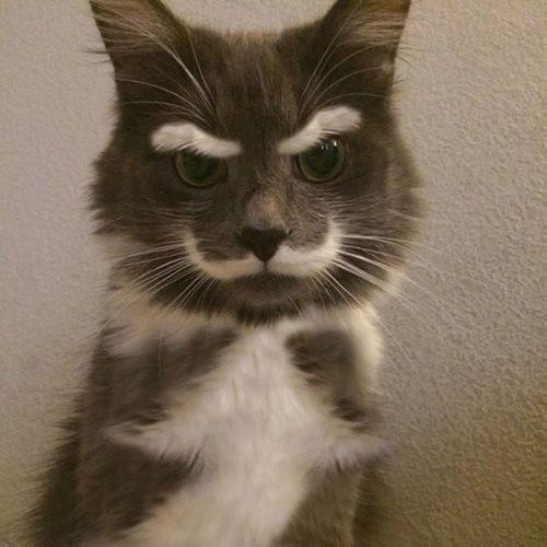 cat Cat FUNNY ANIMALS Funny Pets Rare Beauty