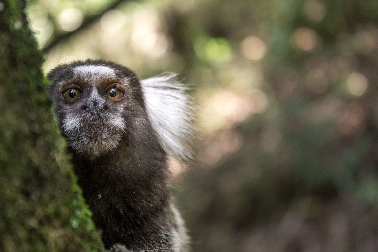 Close-Up Of Lemur On Tree